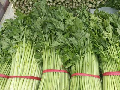 安徽省宿州市砀山县西芹  0.5斤以下 55~60cm 大棚种植 芹菜中小棵都有