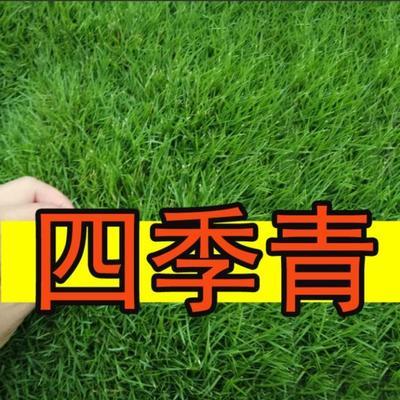 江苏省宿迁市沭阳县四季青