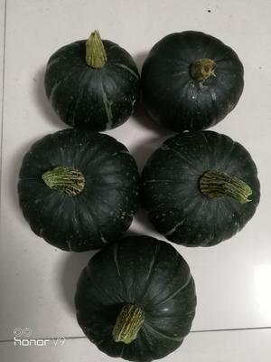广西壮族自治区南宁市青秀区贝贝南瓜 1~2斤