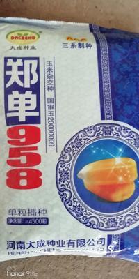 河北省保定市莲池区郑单958玉米种子 双交种 ≥95%