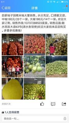 广西壮族自治区柳州市融水苗族自治县沙田柚 1.5斤以上