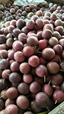 云南省西双版纳傣族自治州景洪市紫红色百香果 60 - 70克