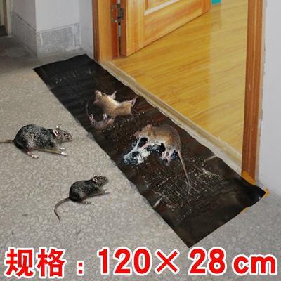 江苏省盐城市东台市诱虫板 粘鼠板