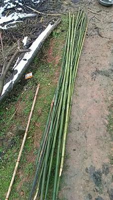 这是一张关于莱架竹 的产品图片