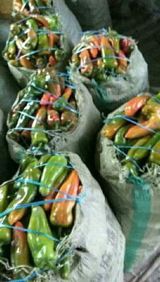 这是一张关于彩椒 10~15cm 中辣 彩色 的产品图片