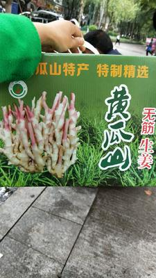 重庆永川区醋泡生姜