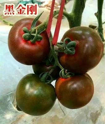 这是一张关于黑金刚黑色番茄种子 ≥99.9% 杂交种 ≥95% 的产品图片
