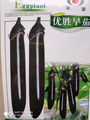 这是一张关于茄子种子 杂交种 ≥85% 的产品图片