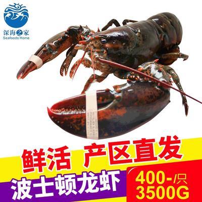 这是一张关于波士顿龙虾 进口 1-2斤/只 的产品图片