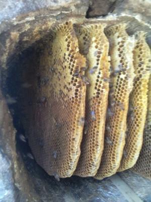 这是一张关于土蜂蜜 散装 2年以上 100% 的产品图片