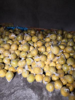 这是一张关于沙田柚 1.5斤以上 的产品图片