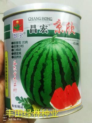 这是一张关于京欣西瓜种子 二倍体杂交种 ≥90% 的产品图片