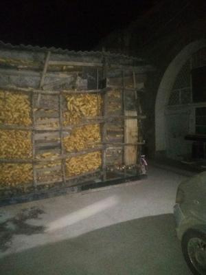 陕西省延安市宝塔区先玉335玉米粒 净货 水份14%-16%