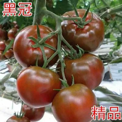 这是一张关于黑冠黑色番茄种子 ≥99.9% 杂交种 ≥99% 的产品图片