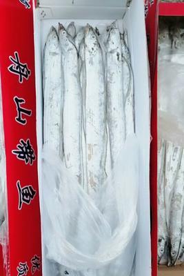 山东省滨州市滨城区舟山带鱼 野生 0.5公斤以下