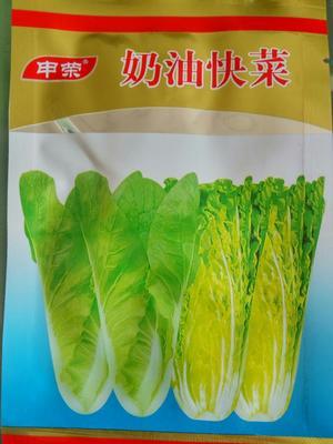 这是一张关于小白菜种子 原种 ≥85% 的产品图片