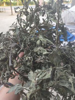 这是一张关于墨旱莲 干 的产品图片