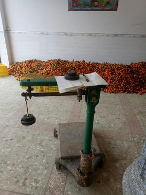 这是一张关于沙糖桔 3 - 3.5cm 1.5 - 2两 的产品图片