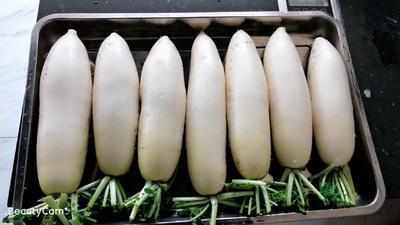 贵州省黔南布依族苗族自治州瓮安县白萝卜 1.5~2斤