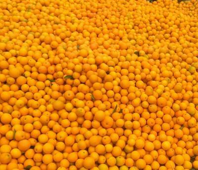 这是一张关于麻阳冰糖橙 60 - 65mm 4两以下 的产品图片
