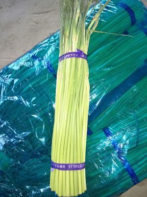 这是一张关于通许蒜薹 40~50cm 的产品图片