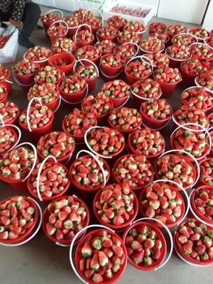 山东省临沂市兰山区甜查理草莓 20克以上