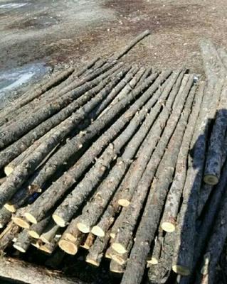 这是一张关于松木 的产品图片