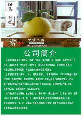 贵州省铜仁市印江土家族苗族自治县红香柚 2斤以上