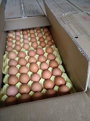 河南省南阳市卧龙区普通鸡蛋 食用 箱装
