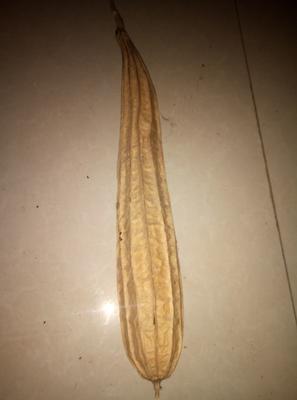 这是一张关于丝瓜络 30cm以下 的产品图片