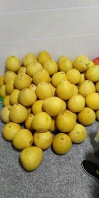 江西省上饶市广丰县马家柚 2.5斤以上