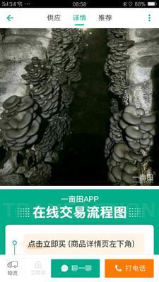 这是一张关于黑平菇 4cm~6cm 的产品图片