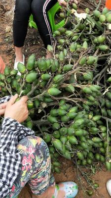 这是一张关于槟榔  海南乐东县优质槟榔的产品图片