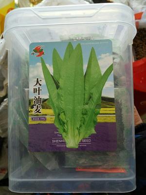 这是一张关于油麦菜种子 的产品图片