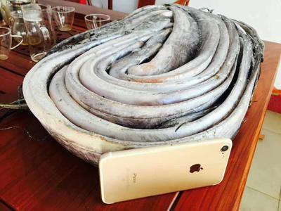 这是一张关于西非带鱼 野生 1-1.5公斤 的产品图片