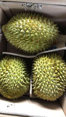这是一张关于越南金枕榴莲 2 - 3公斤 80 - 90%以上 的产品图片