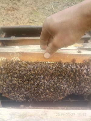 这是一张关于土蜂蜜 塑料瓶装 2年以上 98% 的产品图片