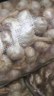这是一张关于金乡大蒜 混级统货 多瓣蒜 的产品图片