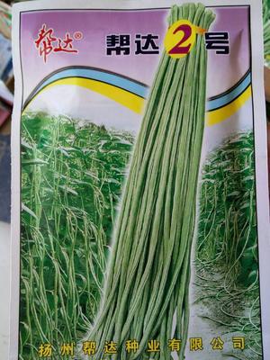 这是一张关于帮达2号长豆角种子 ≥90% 的产品图片