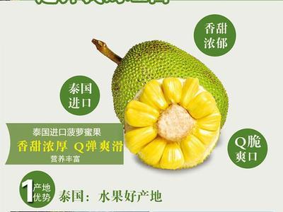 广东省潮州市湘桥区泰国菠萝蜜 10斤以下