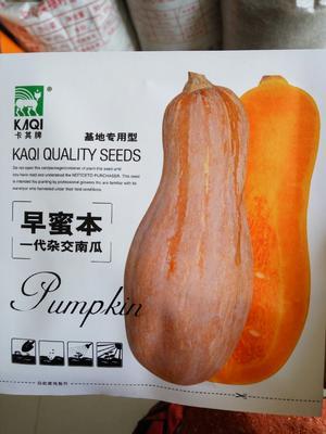 这是一张关于早蜜本南瓜 85% 的产品图片