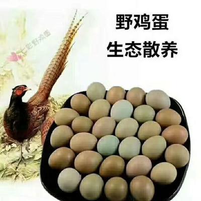 河南省新乡市卫辉市野鸡蛋 食用 箱装