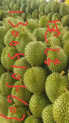 广西壮族自治区百色市靖西县泰国金枕榴莲 5公斤以上 80 - 90%以上
