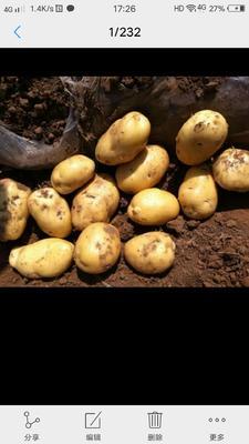 广东省惠州市惠东县荷兰14土豆 2两以上