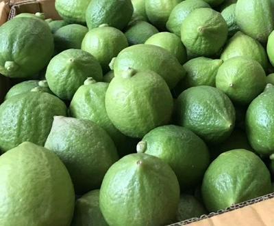 广西壮族自治区南宁市横县香水柠檬 2.7 - 3.2两