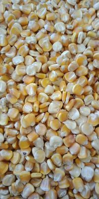 贵州省毕节市威宁彝族回族苗族自治县黄玉米糁 杂质很少 水份14%-16%