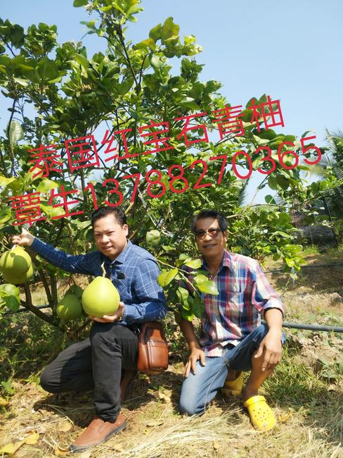 泰国红宝石柚 2.5斤以上