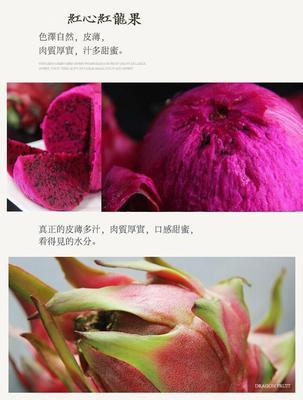 广东省潮州市湘桥区红皮红肉火龙果 大(7两以上)