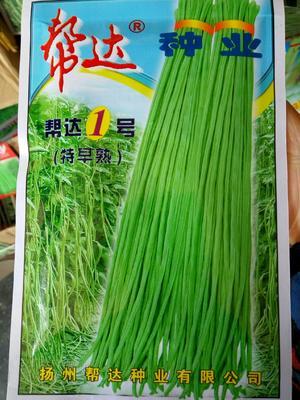 江苏省宿迁市沭阳县帮达1号长豆角 ≥85%