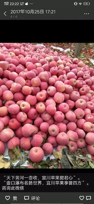 陕西省延安市宜川县红富士苹果 75mm以下 条红 纸袋